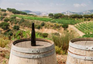 Campo de vino de Alella, denominación de origen